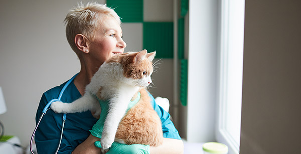 accountant for veterinary practice holding a cat